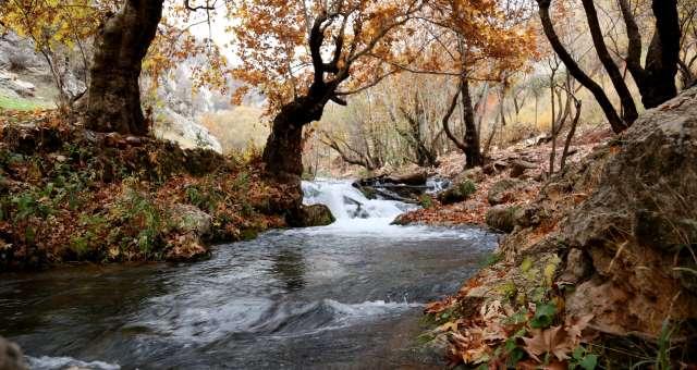 Rimozione di materiale legnoso lungo l'alveo di corsi d'acqua pubblici